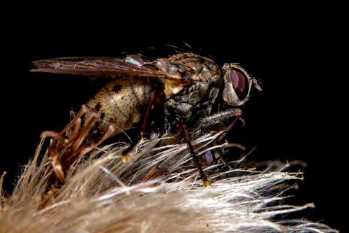 get-rid-of-fruit-flies-in-my-bedroom