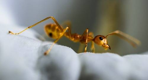 Why-do-ants-come-in-a-clean-house