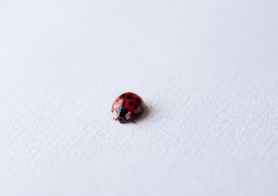 what-causes-carpet-beetles