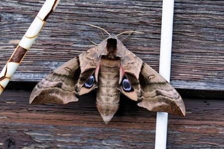 get-rid-of-moths-in-garage
