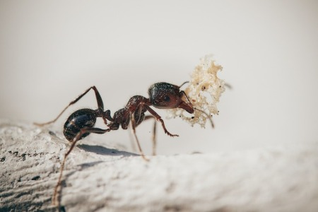 how-to-keep-ants-away-from-bed