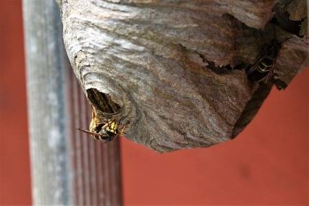 how-to-keep-wasps-away-from-garage