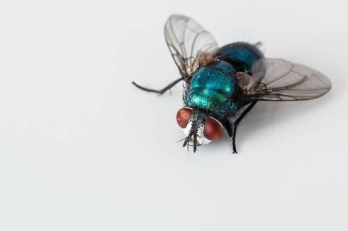 how-to-get-rid-of-flies-in-garage