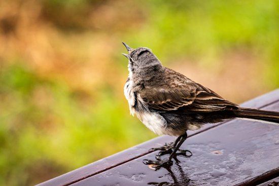 how-to-clean-bird-poop-off-deck