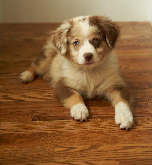 remove-dog-hair-from-hardwood-floors